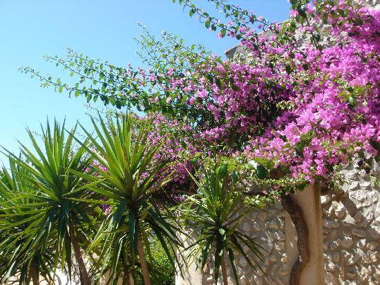 Can Furios Petit Hotel: Bourgainvillea in the terraced garden