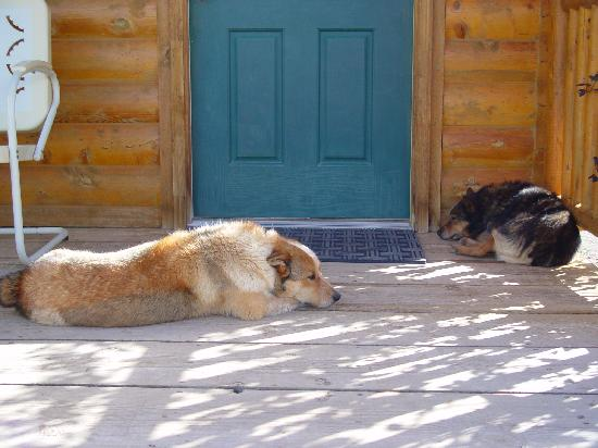 Cowboy Homestead Cabins: Zip & Bandit guarding our cabin