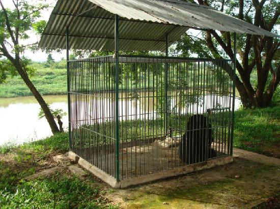 Paksan, Laos: Caged bear