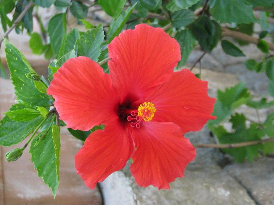 Hotel Villa Campo: ..and beautiful flowers