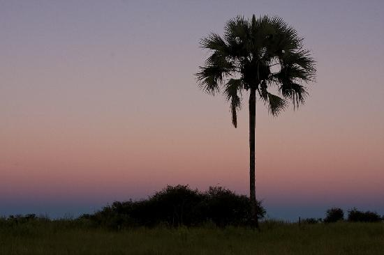 Okavango Delta, بوتسوانا: Oasis, Okavango Delta, Botswana