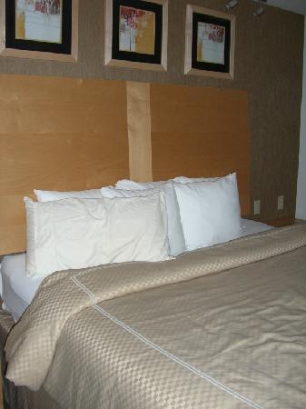 Comfort Suites: Bed