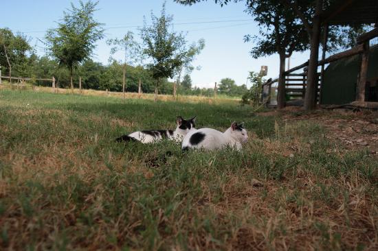 B&B Corte Casone: Gattini del cortile