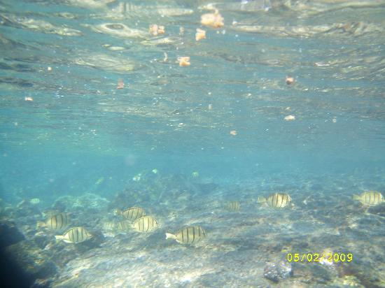 See fish picture of kapoho tide pools pahoa for What do fish see