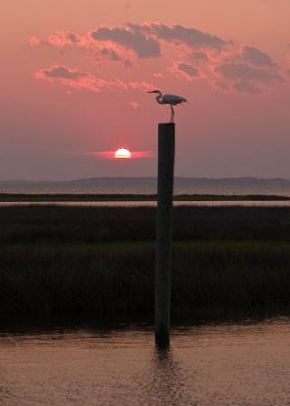 Harkers Island, Caroline du Nord: Sunset from the dock at Great Island