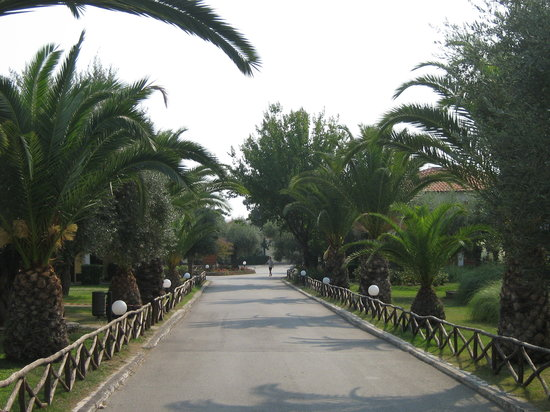 Gerakini, Yunani: palm trees