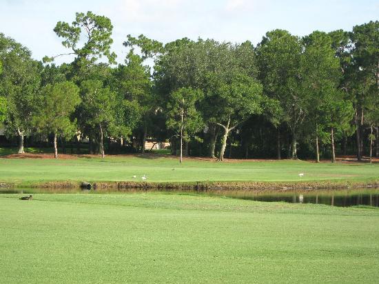 Innisbrook, A Salamander Golf & Spa Resort: Copperhead Course