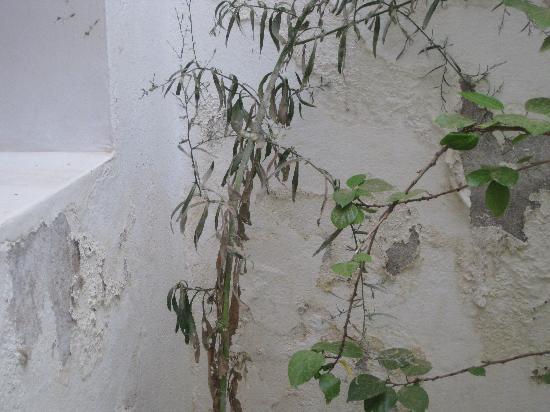 Riad Johana : Murs décrépis