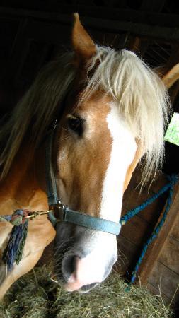 The Warfield House Inn: beautiful horse