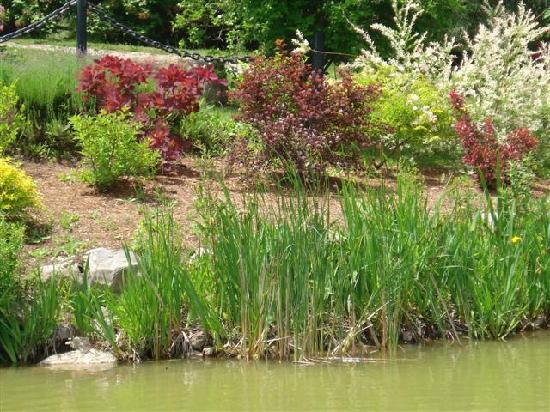 Kurtz Orchards: koi pond