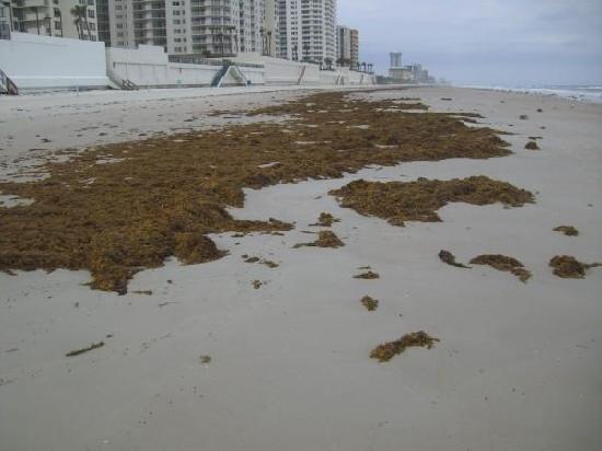 Sea Club IV: the seaweed