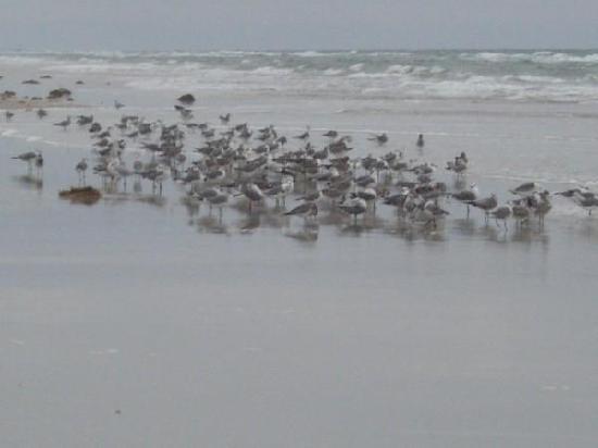 Sea Club IV : birds that morning