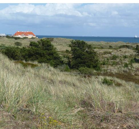 Hotel Skibssmedien Skagen: Skagen, On the heath, just outside town