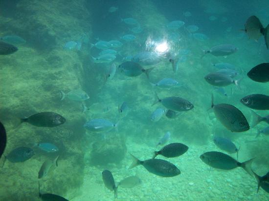 Isla de Benidorm (L'illa de Benidorm): this is from the boat at the island