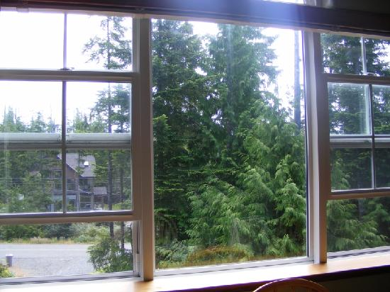 Cobble Wood Guesthouse and Bird Sanctuary House & Suites: View from the window