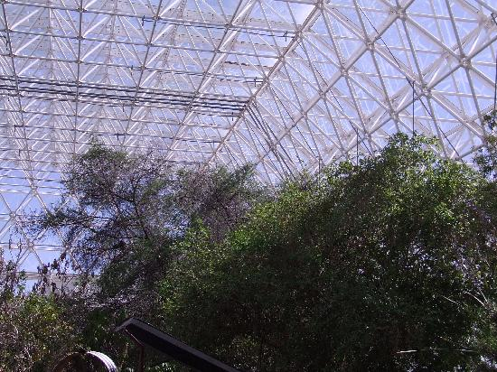 Biosphere 2: Looking up (and out) from the Savannah area