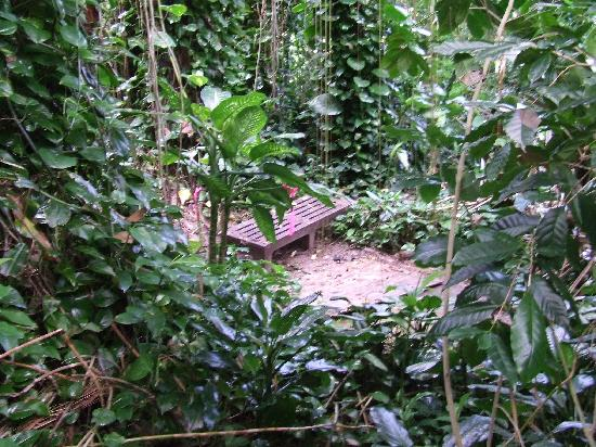 Biosphere 2: The Rain Forest section