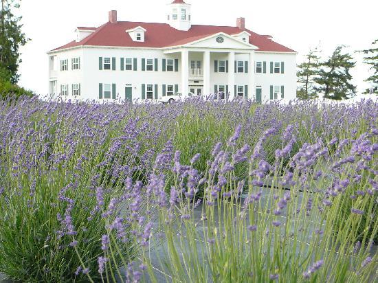 George Washington Inn: Lavendar