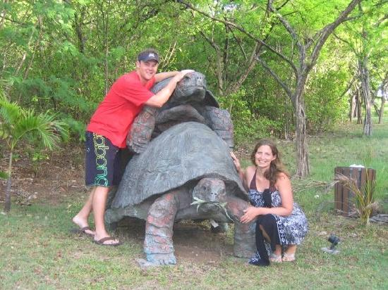 Firefly Mustique Hotel: Funny Turtle Statue