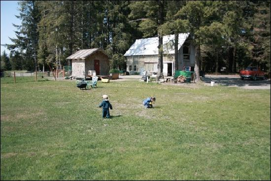 Homestead Bed & Breakfast: The kids loved the garden, sheds and ducks