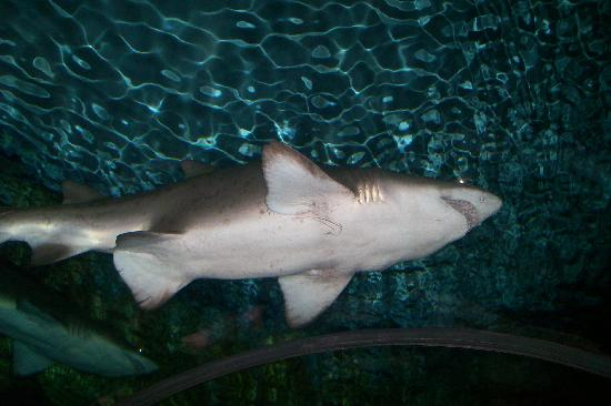 Swimming with sharks deals