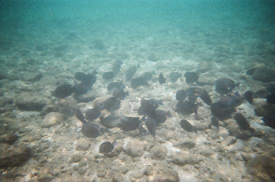 Peanut Island Park: Lots of fish