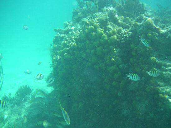 La Perla Del Caribe: snorkeling at La Perla