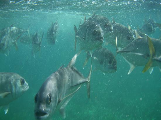 La Perla Del Caribe: FISH!