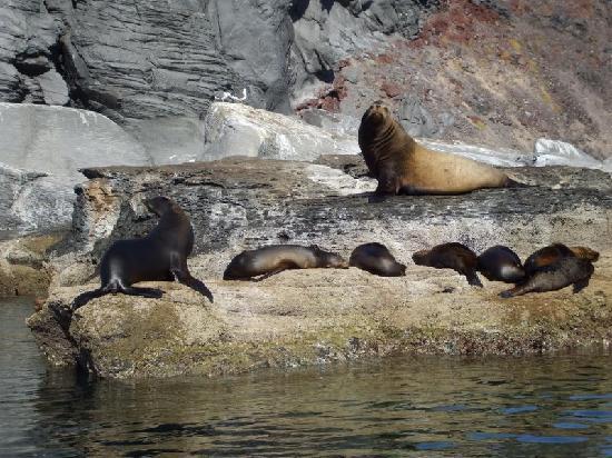 Baja Kaliforniya, Meksika: leones marinos en Coronado ¡¡¡¡bellísimo espectáculo¡¡¡¡¡