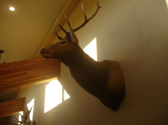 AmericInn Lodge & Suites Chamberlain - Conference Center: Elk