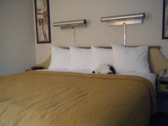 Motel 6 Indianapolis North East: King Size Bed with Exhausted Kitty