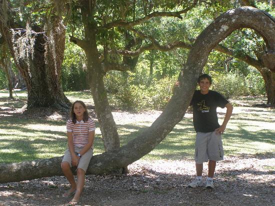 Jungle Gardens: jungle tree