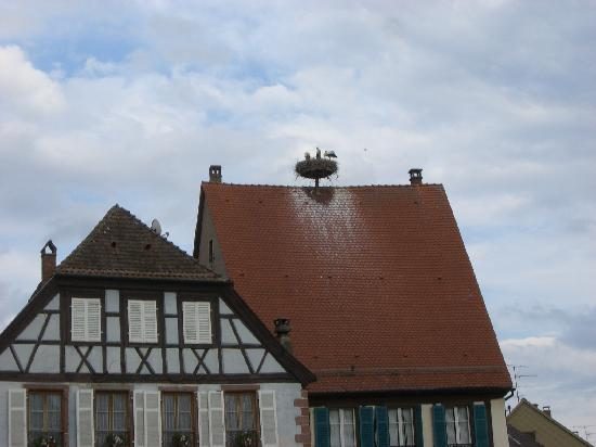 Hotel de la Tour - Ribeauville : Stork nest with 2 chikens