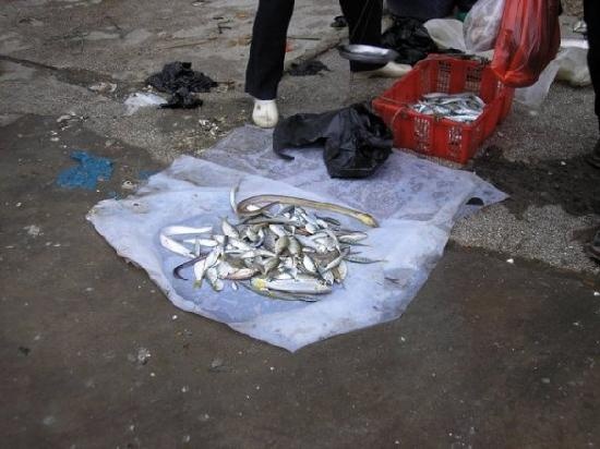 Fish For Sale - Picture Of Zhanjiang  Guangdong