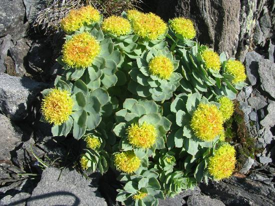 Quirpon Lighthouse Inn: Beautiful wild flower's