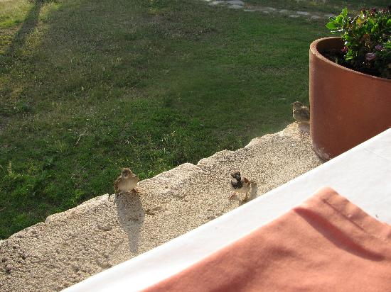 Xenia Ouranopolis: Sparrows asking to share breakfast