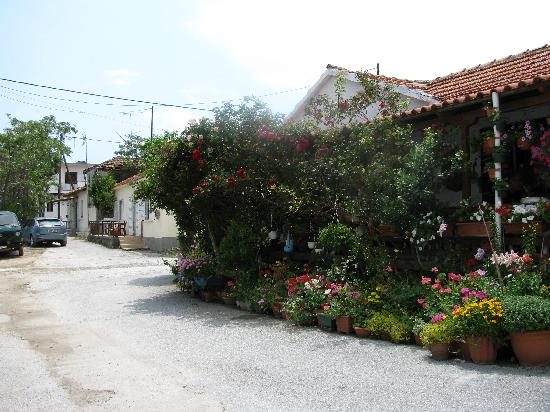 Agionissi Resort: Lots of flowers in town