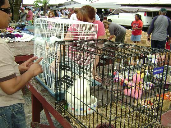 Dover, DE: Buy a Bunny at the Sale