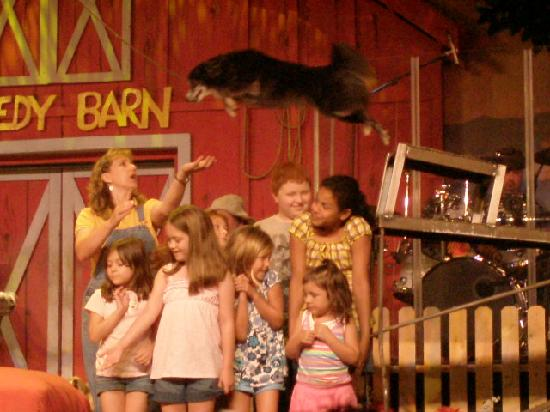 Comedy Barn: All Dogs in the show are rescued from the Animal Shelter