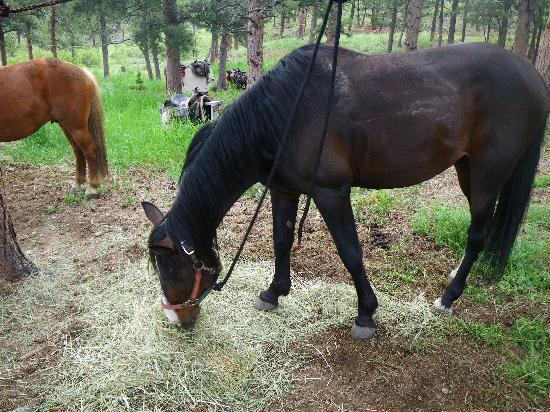 Cherokee Park Ranch: Rush