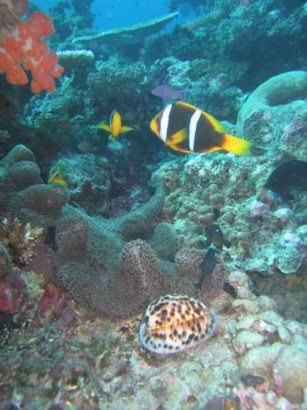 Nakia Resort & Dive: Rainbow reef coral, anemone, and clown fish