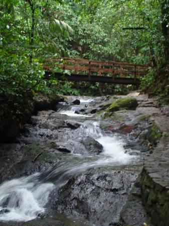 Termales del Bosque: The river