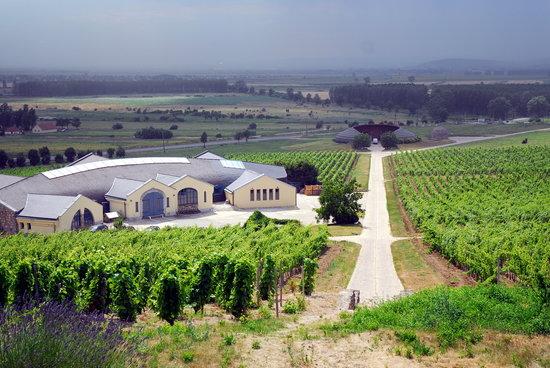 Tokaj Wine Region: Tokaj, Disznókő, winery