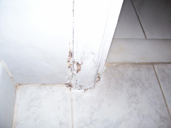 Hotel International: Rotten woodwork giant ants coming from