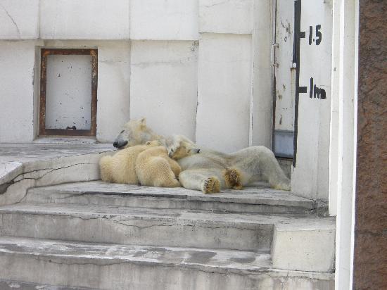 Maruyama Zoo: まだ赤ちゃん
