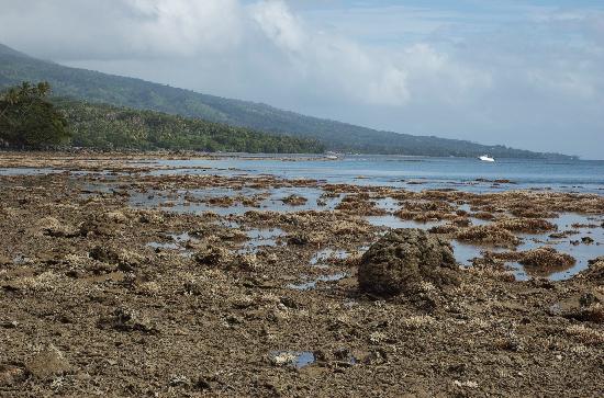 Nakia Resort & Dive: Coastline at low tide.