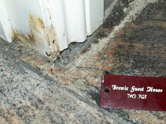 Twickenham Guest House: ants on the floor