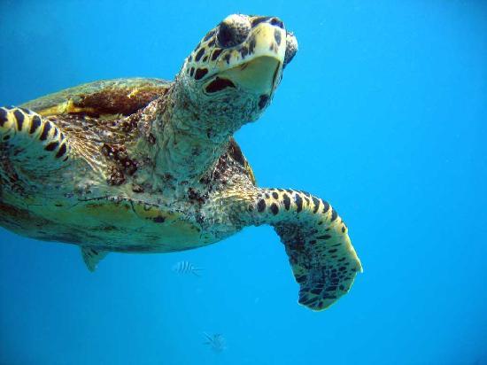 Anse la Blague, Îles Seychelles : rencontres très sympa...mais ne pas toucher!!