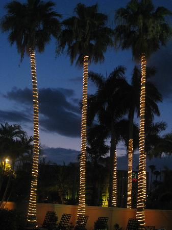DoubleTree by Hilton Hotel West Palm Beach Airport: The Palm trees lit up around the pool