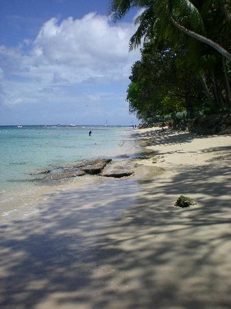 Starfish Discovery Bay: Paradise!